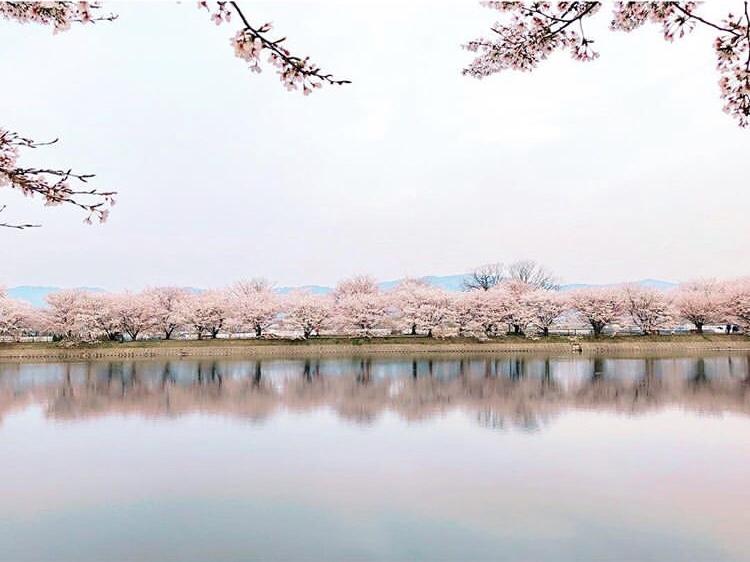 唐古・鍵遺跡の春