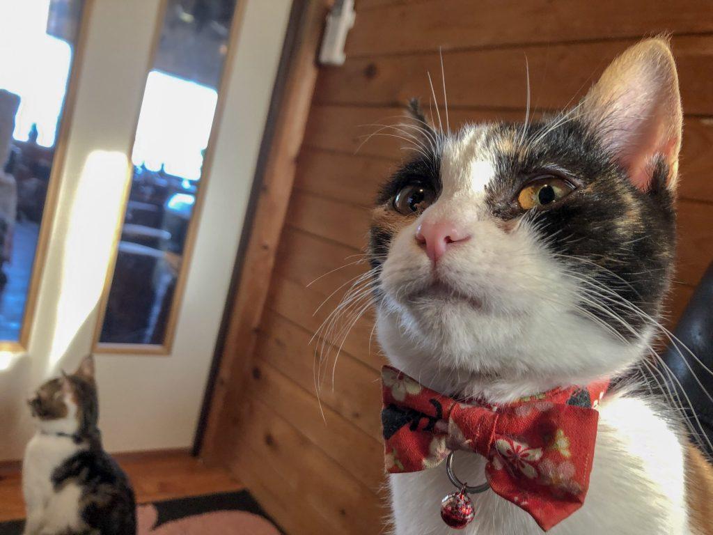 五島の猫カフェ にゃんこはうす